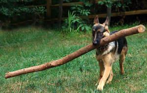 A Big Stick.jpg